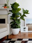 Round white planter in a living room