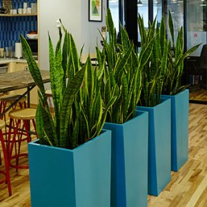 Line of 4 teal tall rectangular planters in a dining area