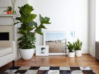 Collection of white planters in a modern home