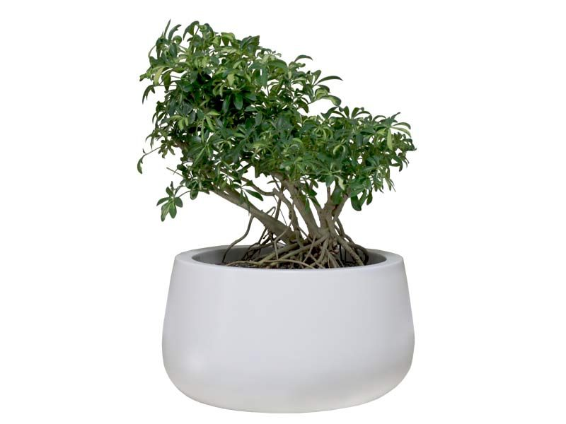 Short hayden white planter