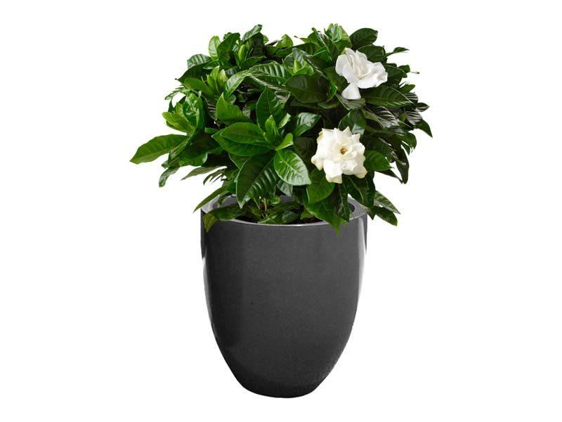 Valencia gray round planter