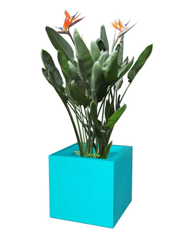 Montroy cube teal planter