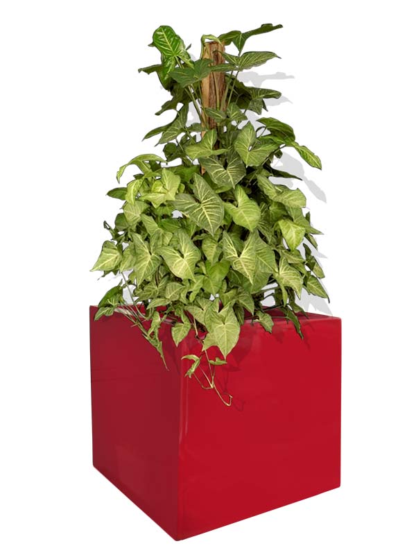 Montroy cube red planter