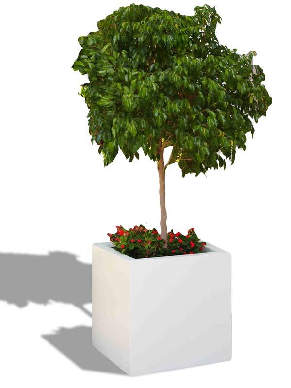 Montroy cube white planter