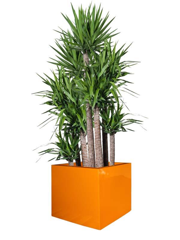 Montroy cube orange planter