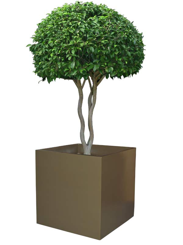 Montroy cube brown planter