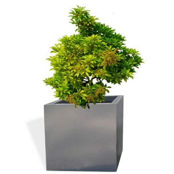 Montroy cube gray planter