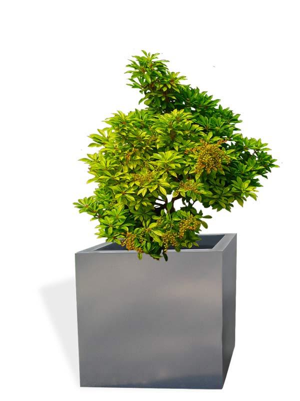 Montroy cube gray planter
