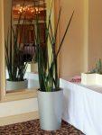 Round white planter indoors