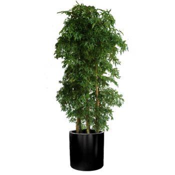 Black cylindrical planter