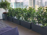 Gray rectangular planters