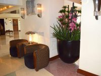 Large round black planter indoors