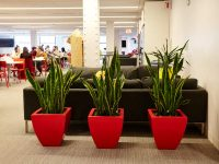 Three red planters in a co working space