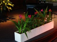 narrow white rectangular planter indoors