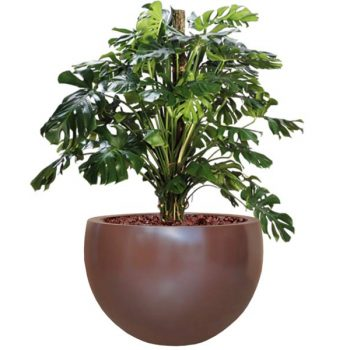 Tarragona tapered round brown planter