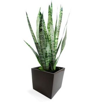 Tonto table top brown planter