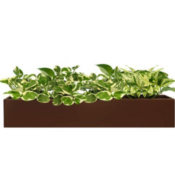 Long, short wheeling table top rectangular brown planter