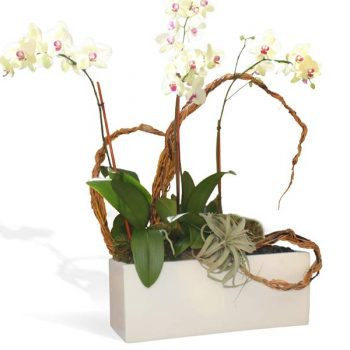 White rectangular table top planter