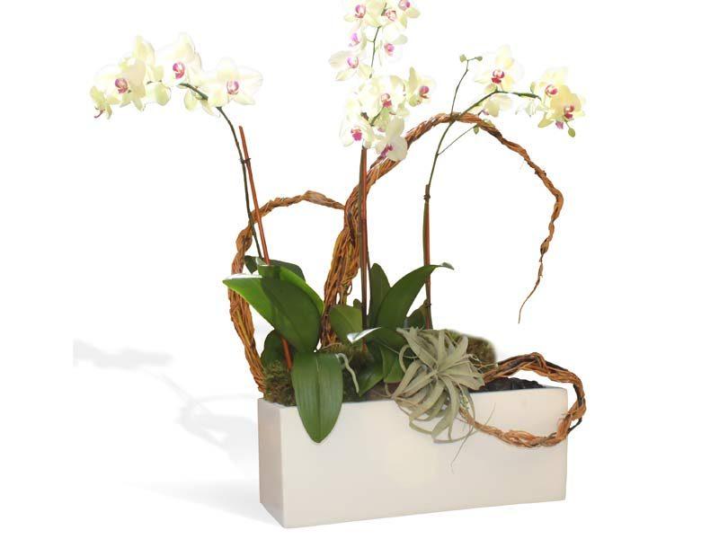 White rectangular table top planter