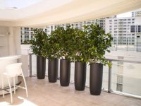 Five tall cylinder planters on a balcony