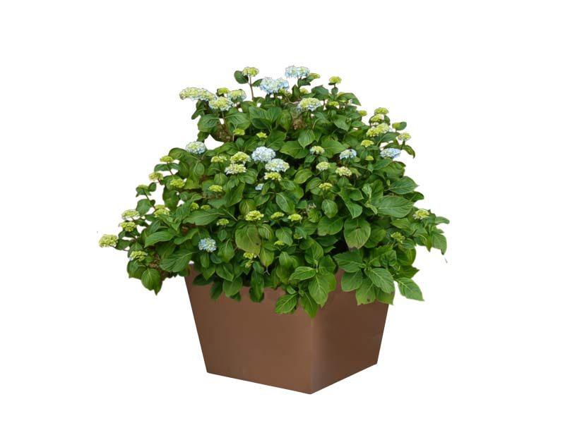 Bergen brown tapered square planter