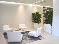 White planters in an office space