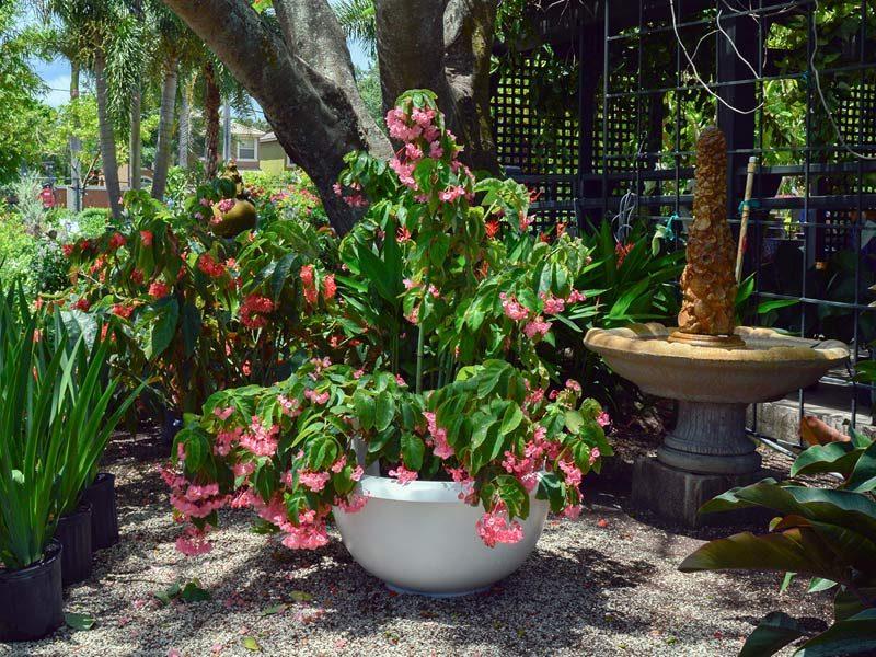 Niagra planter in an outdoor garden area