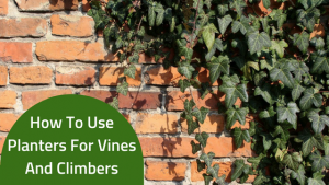 How To Use Planters For Vines And Climbers-2