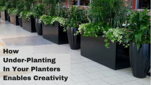 How Under-Planting In Your Planters Enables Creativity
