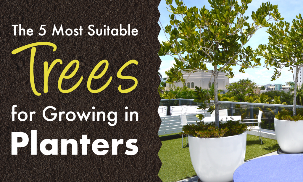 Trees to Grow in Planters