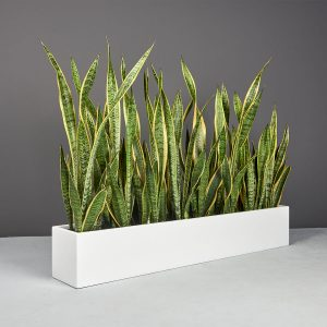 Wheeling Narrow Rectangular Planter Matte Bright White