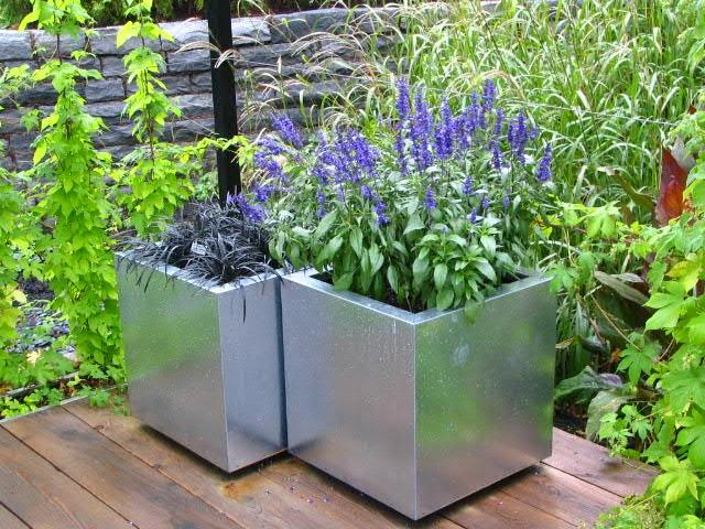 Prepare plants for containers