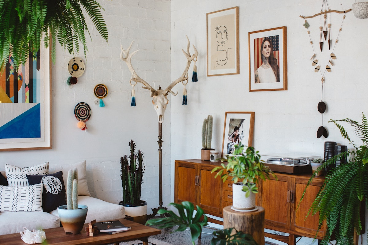 Room decor with low-maintenance plants