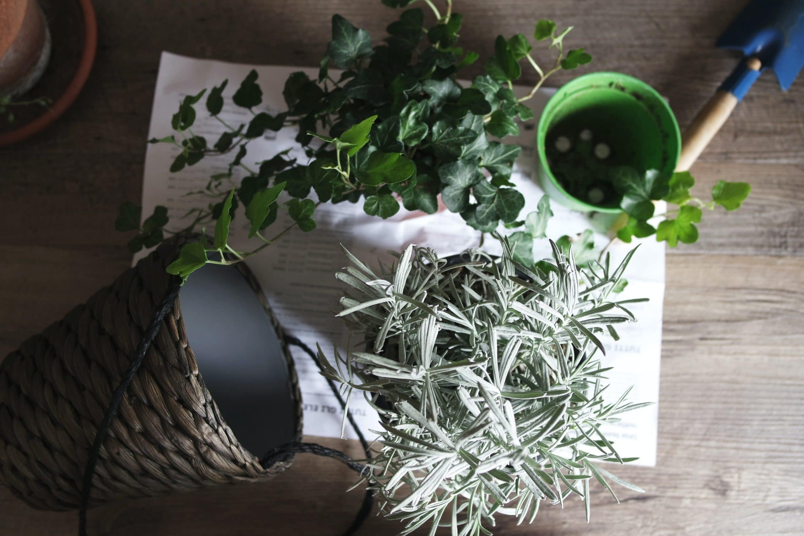 plants that thrive indoors