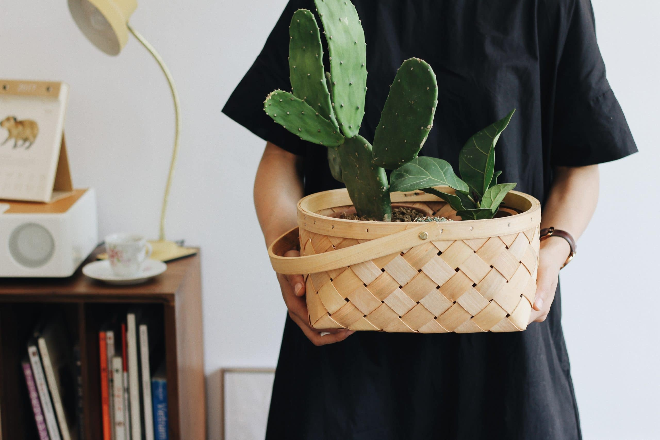Stick to your plant care routine