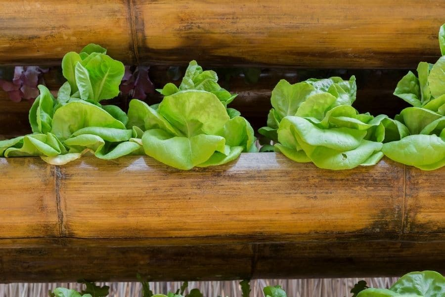 best vegetables to grow in pots lectures