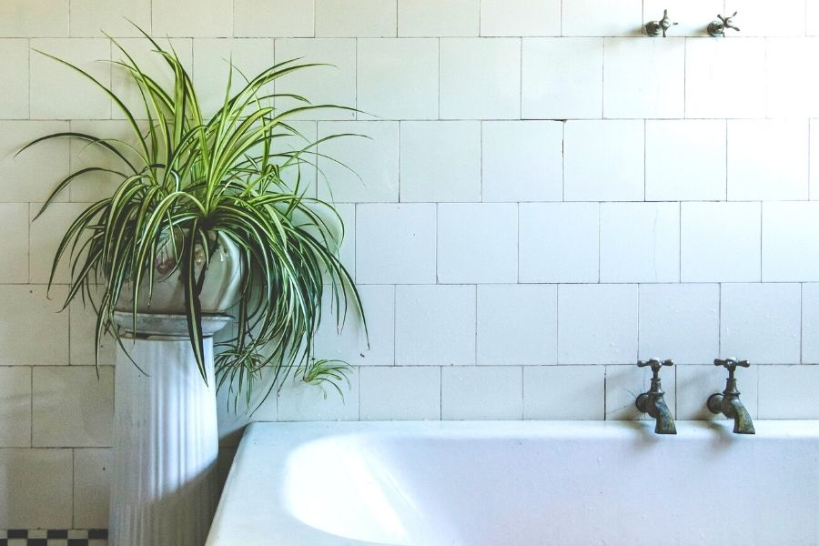 bathroom plants that absorb moisture
