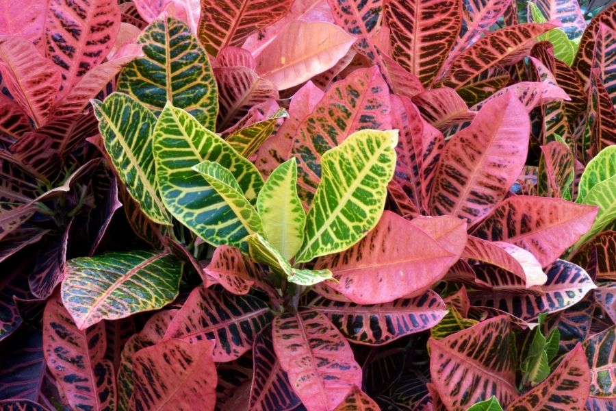 house plants that like direct sunlight