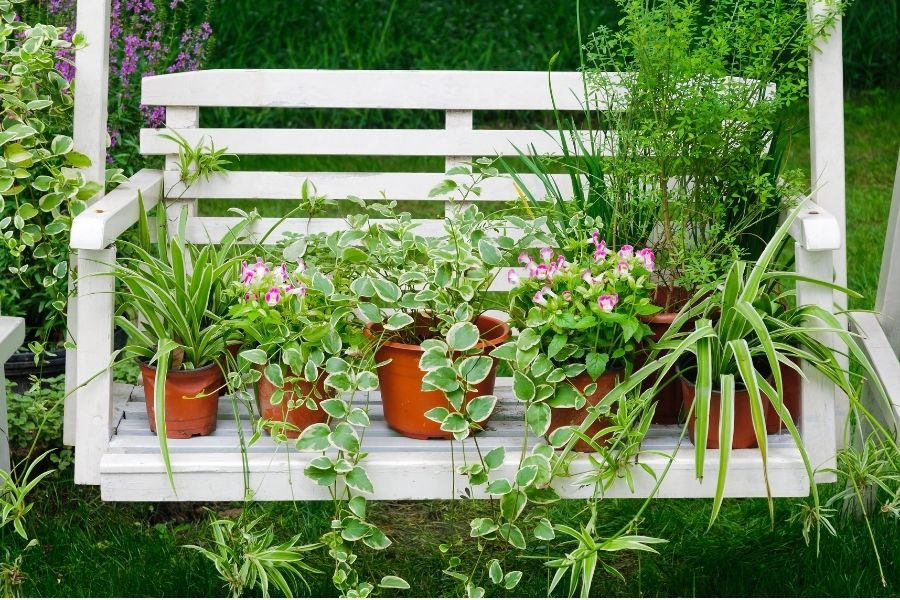 plants for rooftop gardens
