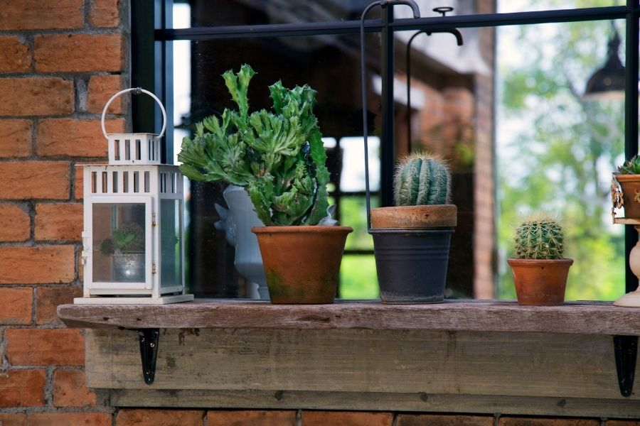 plants for small pots