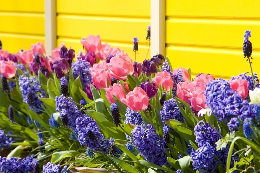 best flower pot arrangements Keukenhof Gardens