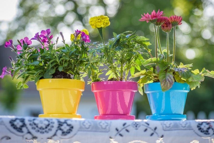 Flower Pot Color Ideas