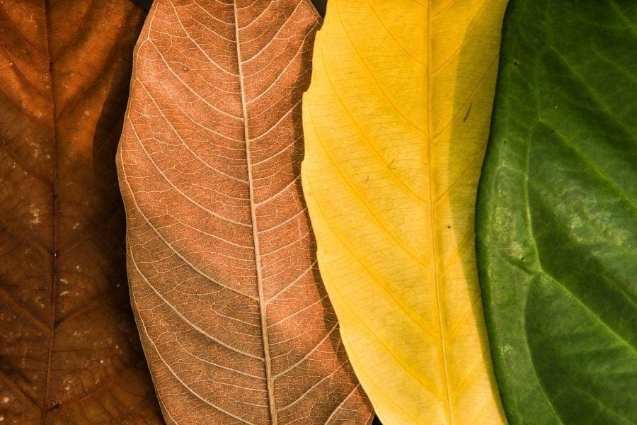 colorful seasonal leaf