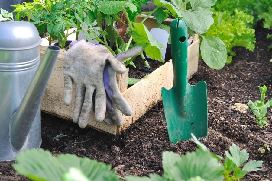 shovel in the soil with vegetable plant in pot for planting
