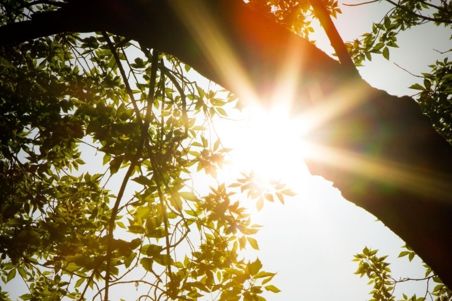 tree leaves and bright sunlight and lens flare.