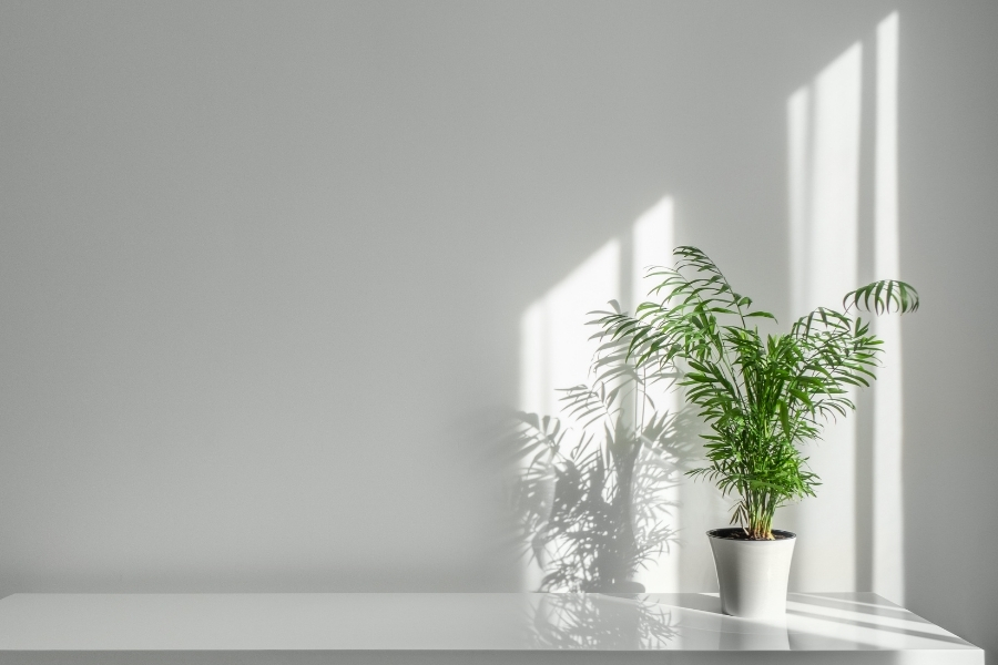 green plant at an empty corner