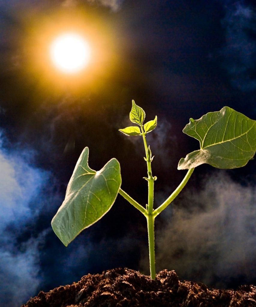 Plant growing in dirt backlit by sun