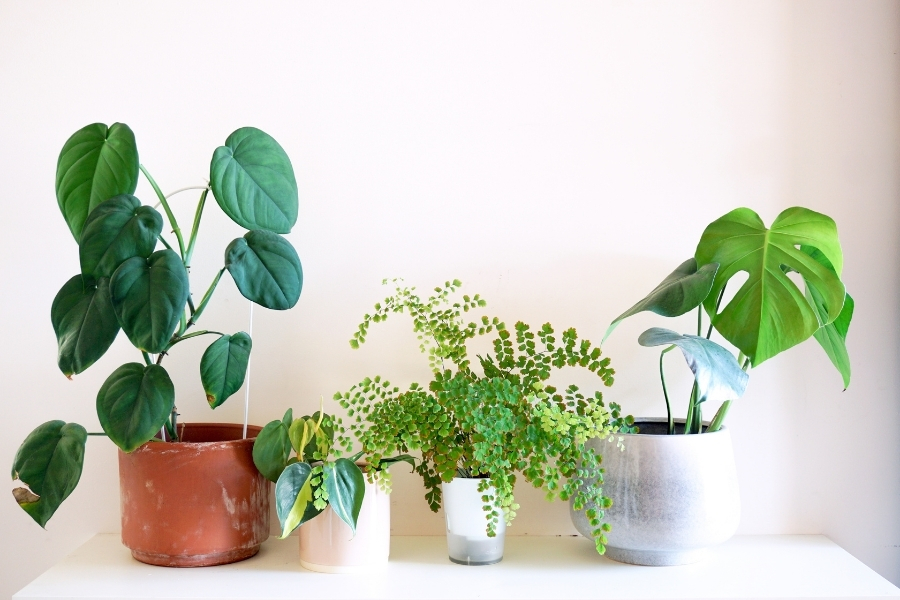 best small plants for home