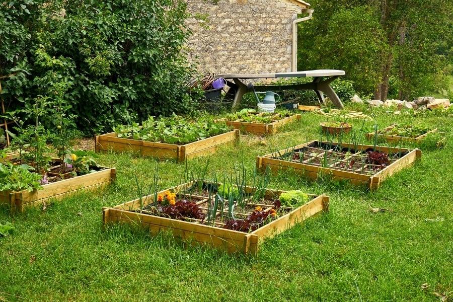 Organic Garden In Medieval Village On A Sunny Day At Cabiac Occitanie France