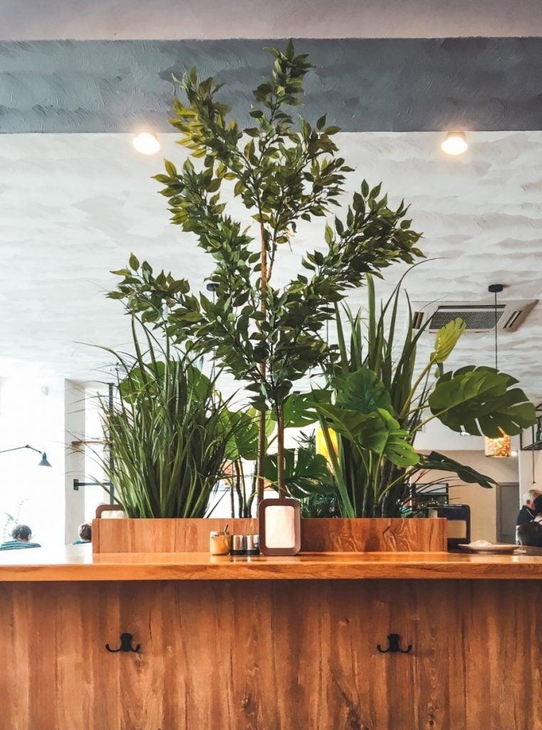 Indoor plants in a coffee shop